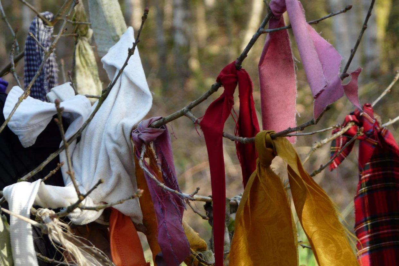 Vodden in de Koortsboom van Sint Walrick (Hatertsche Vennen)